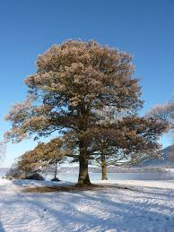 cumbria s top trees gallery sam s serendipity snow tree