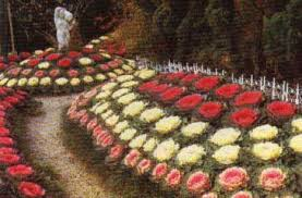 Resultado de imagen para imagenes de col ornamental