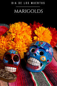 the role marigolds play in dia de los muertos cempas atilde ordm chil learn more about role that marigolds play in dia de los muertos celebrations