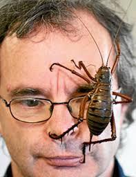 El segundo es un Weta, un saltamontes endémico de Nueva Zelanda del tamaño de una rata. El primero parece alguna especie de Insecto palo. - the-biggest-bugs08