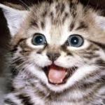 So excited cat Meme Generator - Imgflip via Relatably.com