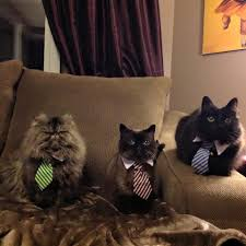 dog people are better than cat people here s why but these cats most likely resent their owners
