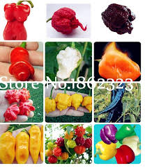 best chilli 2 15 brands and get free shipping - e884c0a9