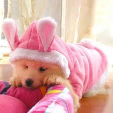 <b>2015 New Pet Dog</b> Cat Cute Bunny <b>Clothes</b> Warm <b>Clothes</b> Autumn ...