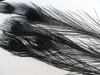 Black Feathers For Decorations Australia | New Featured Black ...