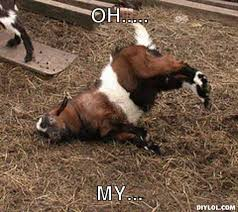 Fainting Goat Meme Generator - DIY LOL via Relatably.com