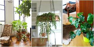 room plants x: exceptional most beautiful indoor plants  house beautiful