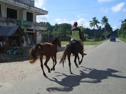 Kuda-Pacu