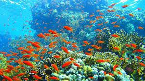 """Résultat de recherche d'images pour """"image barrier de corail australie"""""""