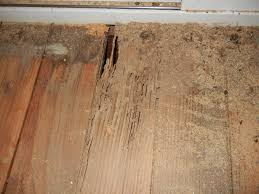 Image result for home remedies to get rid of termites