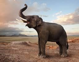 Картинки по запросу фото слоны