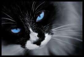 Re-Activated Cats (Long Bio) - Skyheart, Snowfire. Stoneclaw, Fadedstripe, Silversong, Echokit, Sweetkit, Squirrelfur and Tallshade Images?q=tbn:ANd9GcST8fPA8raj9gvNT1__jFJgV7R3pPo6LvNDSZDNHuKQMsKx7YmnWg