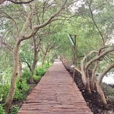 Hasil gambar untuk hutan mangrove pik