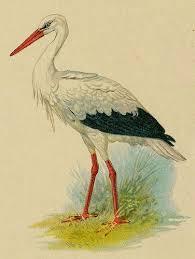 chr litho Stork det   Живопись птицы, Птицы и Животные