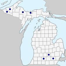 Geum urbanum - Michigan Flora