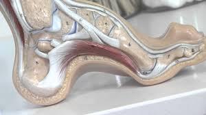 edmonton foot ankle pain centre edmonton foot ankle pain centre