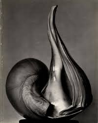untitled the friends of photography ew centennial essays untitled 41 the friends of photography ew 100 centennial essays in honor of edward weston