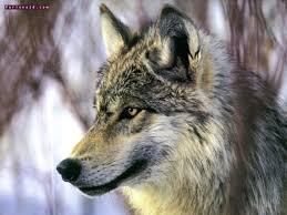الحيوان الذي ياكل الجن images?q=tbn:ANd9GcS