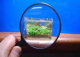 Las cosas más pequeñas del mundo. Listas de lo más top. Lo mas buscado