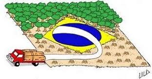 Resultado de imagem para IMAGENS DE DESMATAMENTO NO BRASIL SEM PUNIÇÃO E ALTERNATIVA.