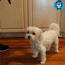 No Pull <b>Dog Harness</b> | <b>Custom</b> Dog Walking Harness | PetSwag