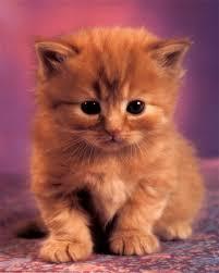 תוצאת תמונה עבור חתולים
