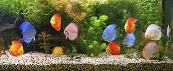 <b>Fish</b> | Healthy Pets, Healthy People | CDC