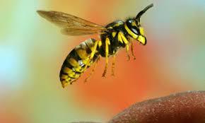 Image result for wasps