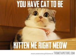Memes Vault Funny Cat Memes for Work via Relatably.com