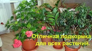 Мои цветы и супер подкормка для всех <b>комнатных растений</b> ...