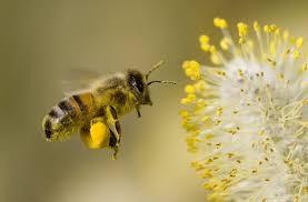 Резултат с изображение за пчели през март