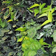faq indoor plant health benefits brisbane office plants