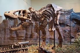 <b>Tyrannosaurus</b> - Wikipedia