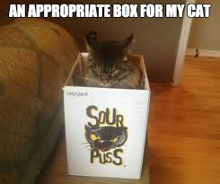 An Appropriate Box For My Cat | WeKnowMemes via Relatably.com