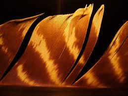 Lichtfeder - Bild \u0026amp; Foto von Markus Günzel aus Strukturen ...