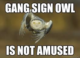 Gang Sign OWL Is Not amused - Gang Sign Owl - quickmeme via Relatably.com