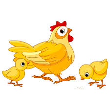 Image result for clip art poultry