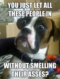 "Best of ""Baffled Boxer"" Dog Meme (16 Pics) 