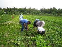 Risultati immagini per agricoltura e giovani a firenze