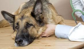 Причины поноса у собак