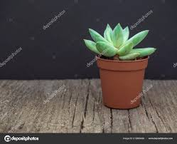Natural <b>Green Cactus Aloe</b> Succulent Pot Wooden Background ...