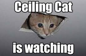 10 of the Web's most popular cat memes | MNN - Mother Nature Network via Relatably.com