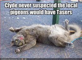 Memes Vault Funny Animal Memes via Relatably.com