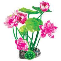 «Кувшинка(нимфея), <b>растение для аквариума</b>» — Товары для ...
