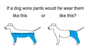 How Should a Dog Wear Pants? | Know Your Meme via Relatably.com