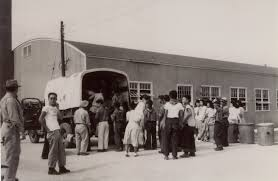 photo essay  colorado    s amache concentration camp   densho    arrival of japanese americans transferring from tule lake  ca       catherine ludy collection