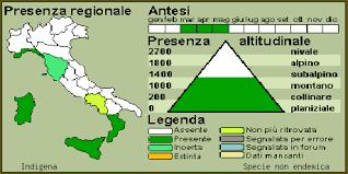 Scheda IPFI, Acta Plantarum