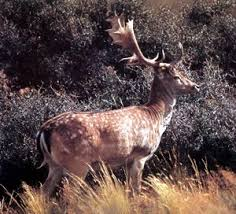 Image result for hunting deer in nz