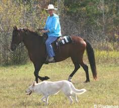 Ποιοι  σκύλοι χρησιμοποιούνται μαζί με άλογα...