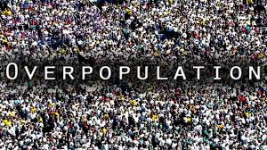 essay thesis overpopulation essays on overpopulation photo essay causes of overpopulation essays thesis overpopulation